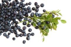 Bilberries Stock Images