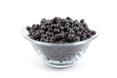 Bilberries royalty free stock image