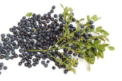 Bilberries Royalty Free Stock Photography