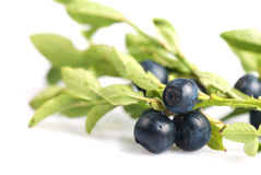 Bilberries. Heap with green leaf close up isolated on white backgraund Stock Photo