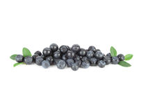 Bilberries. Isolated Royalty Free Stock Image