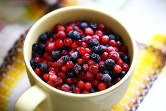 Free Bilberries Royalty Free Stock Photography - 29159277
