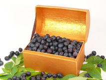 Bilberries stock photo