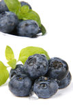 Bilberries Stock Images