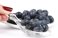 Bilberries. Very fresh and sweet bilberry royalty free stock photo