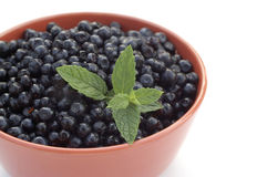 Bilberries. With sprig of mint Stock Images