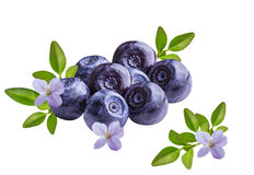 Bilberries blueberries, isolated on white background. Fresh Bilberries blueberries, isolated on white background Royalty Free Stock Image