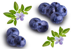Bilberries blueberries, isolated on white background. Fresh Bilberries blueberries, isolated on white background Royalty Free Stock Photography