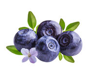 Bilberries blueberries, isolated on white background Stock Image