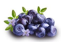 Bilberries blueberries, isolated on white background Royalty Free Stock Photo
