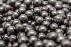 Bilberries Close Up Background Stock Photos