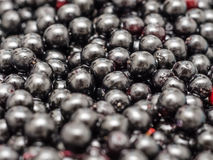 Bilberries Close Up Stock Images