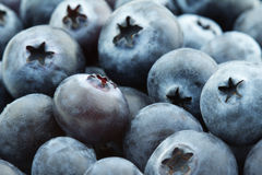 Bilberries Stock Photos