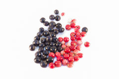 Bilberries and cowberries isolated Stock Photography