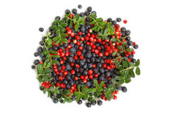 Bilberries and cranberries Royalty Free Stock Image