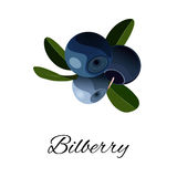 Bilberries isolated icon. Vector illustration Royalty Free Stock Photo
