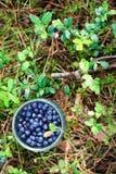 Bilberries in the jar Stock Photo