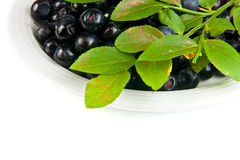 Bilberries on white dish. Bilberries and the branch of an bilberry bush, and also fresh-cut berries on white dish Royalty Free Stock Images