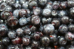 Bilberry. Background of the wet blueberries Royalty Free Stock Image