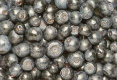 Bilberry Royalty Free Stock Images
