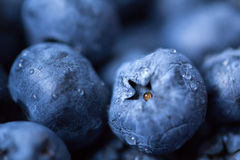 Bilberry background Royalty Free Stock Photos