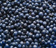 Bilberry Background Photo Stock Photo
