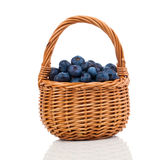 Bilberry Stock Photo