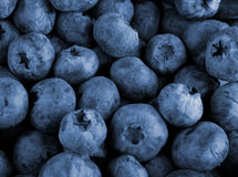 Bilberry berries close up stock image