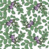 Bilberry berry pattern stock illustration