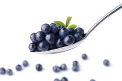 Bilberry. Bilberry spoon for a dessert Stock Photo