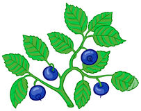 Bilberry branch Stock Photography