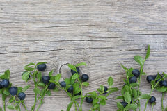 Bilberry branches with berries on wooden background Royalty Free Stock Image