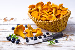 Bilberry and chanterelles Royalty Free Stock Photo