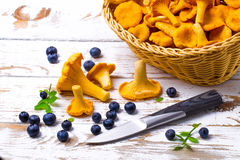 Bilberry and chanterelles Stock Photography