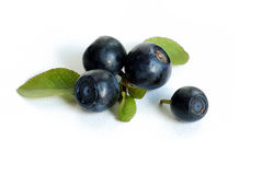 Bilberry close-up Stock Photo