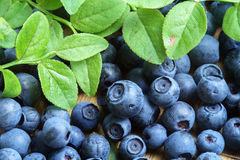Bilberry Close Up Royalty Free Stock Image