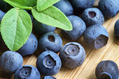 Bilberry Close Up Stock Photo