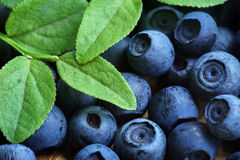Bilberry Close Up Stock Images