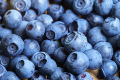 Bilberry Close Up Royalty Free Stock Photo