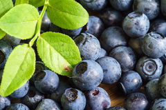 Bilberry Close Up Royalty Free Stock Photos