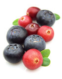 Bilberry and cranberry Stock Image