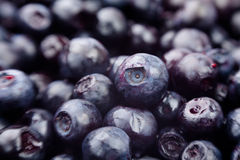 Bilberry macro closeup Stock Image