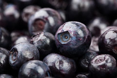 Bilberry macro closeup Royalty Free Stock Photography