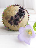 Bilberry muffins Stock Images
