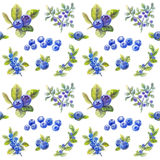 Bilberry pattern Stock Photo