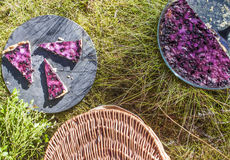 Bilberry pie picknick Royalty Free Stock Images