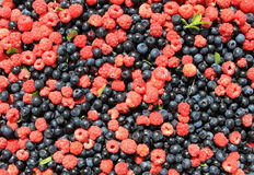 Bilberry with a raspberry Stock Image