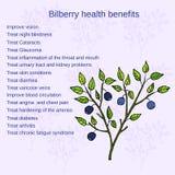 Bilberry ripe. Vector illustration Royalty Free Stock Photo