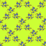 Bilberry seamless pattern Stock Photography