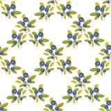 Bilberry seamless pattern Royalty Free Stock Photo